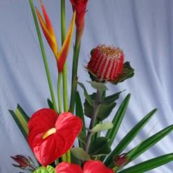 Kalikimaka.flowers