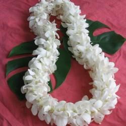 Hawaiian.lei.white.orchids