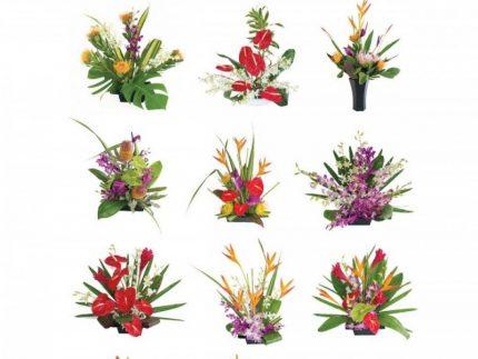 Hawaiian flowers for every month