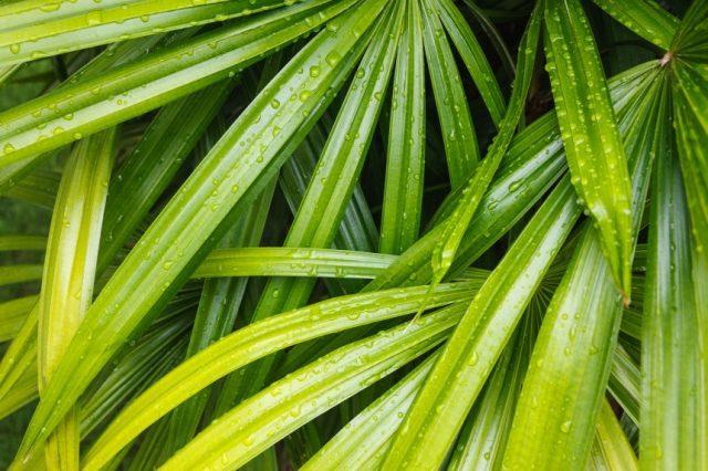 tropical.palm