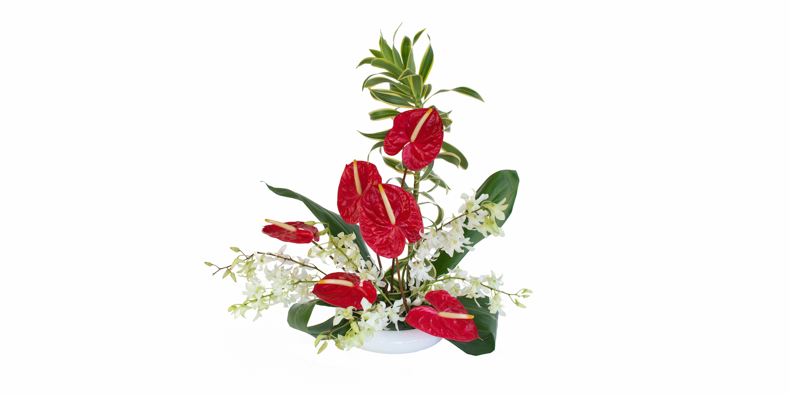 Valentine flowers anthurium and orchds