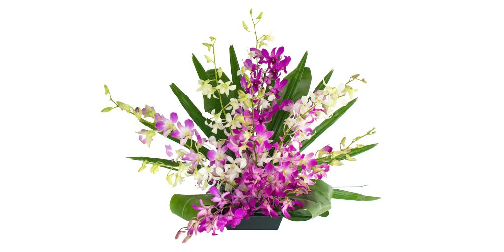 dendrobium orchid sprays from Hawaii