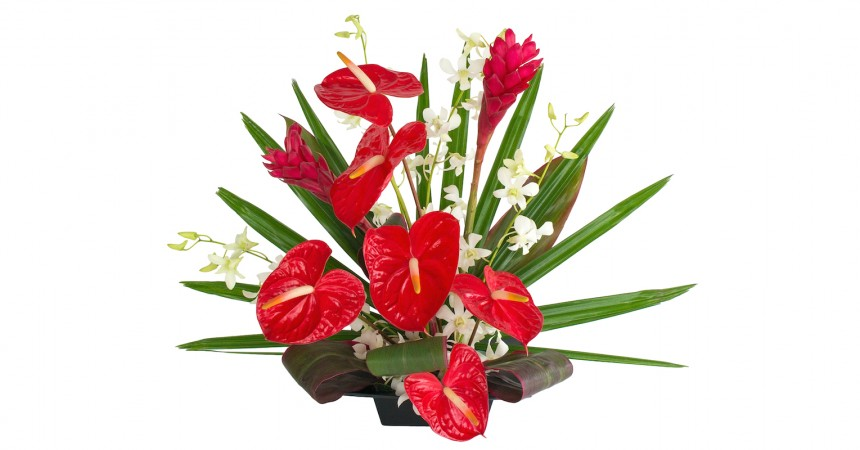 white orchids with red anthurium