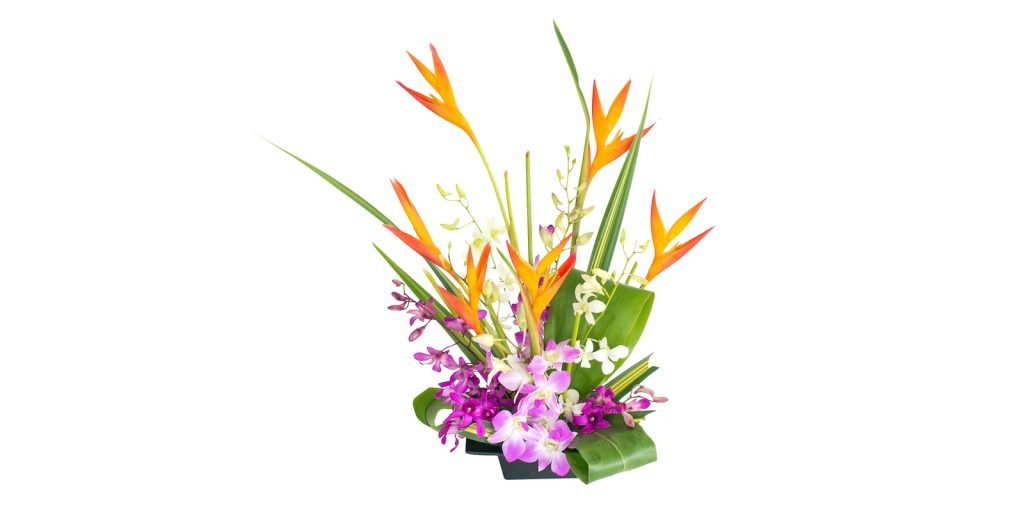 Heliconia and orchids