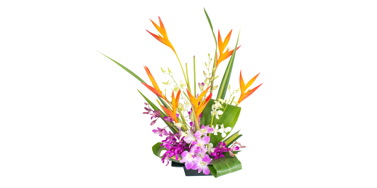 heliconia and orchids flowers of the month August