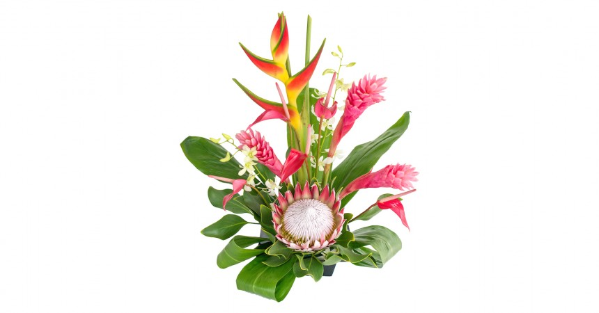 tropical flowers pink ginger heliconia