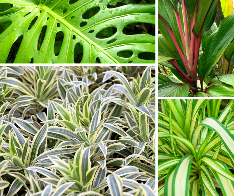 Hawaiian tropical foliage assortment