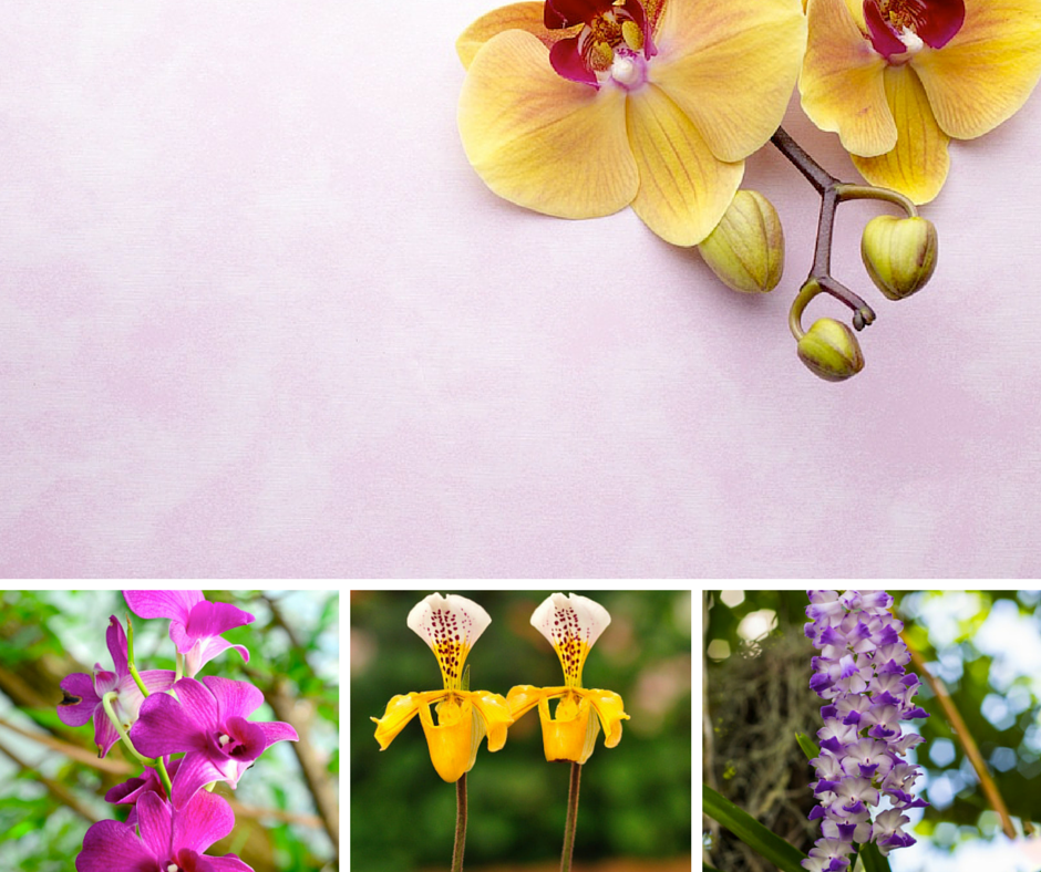 mixed Hawaiian orchids