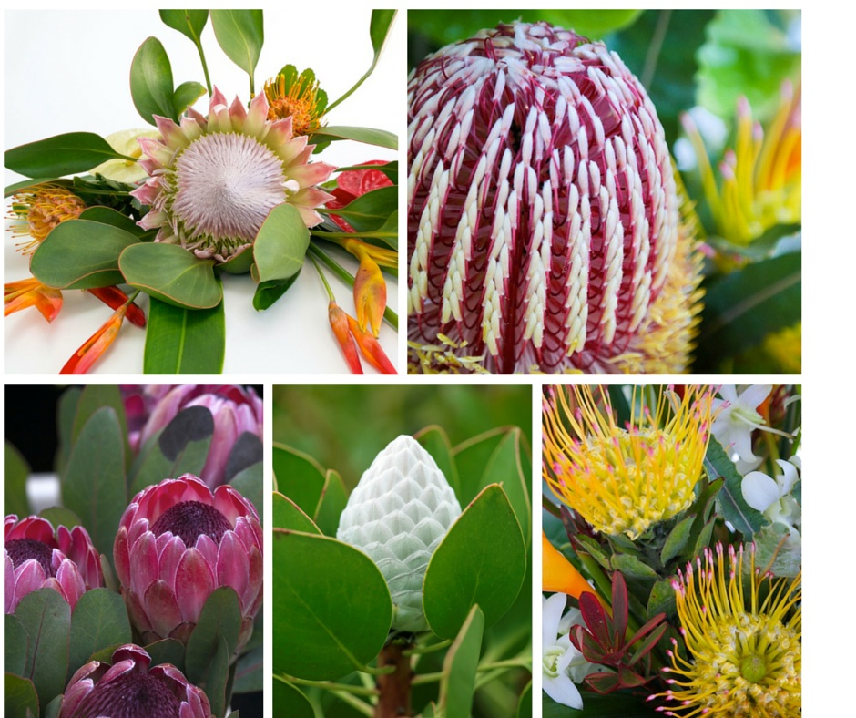 Maui protea flower assortment