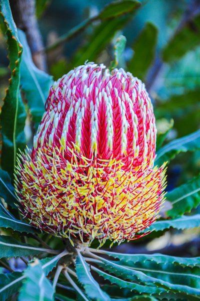 weird Hawaiian flower seen on Maui