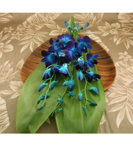 blue orchid sprays