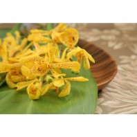 mokara orchid yellow