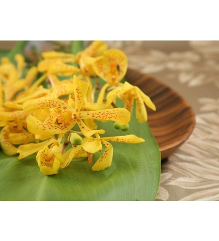 mokara orchid yellow