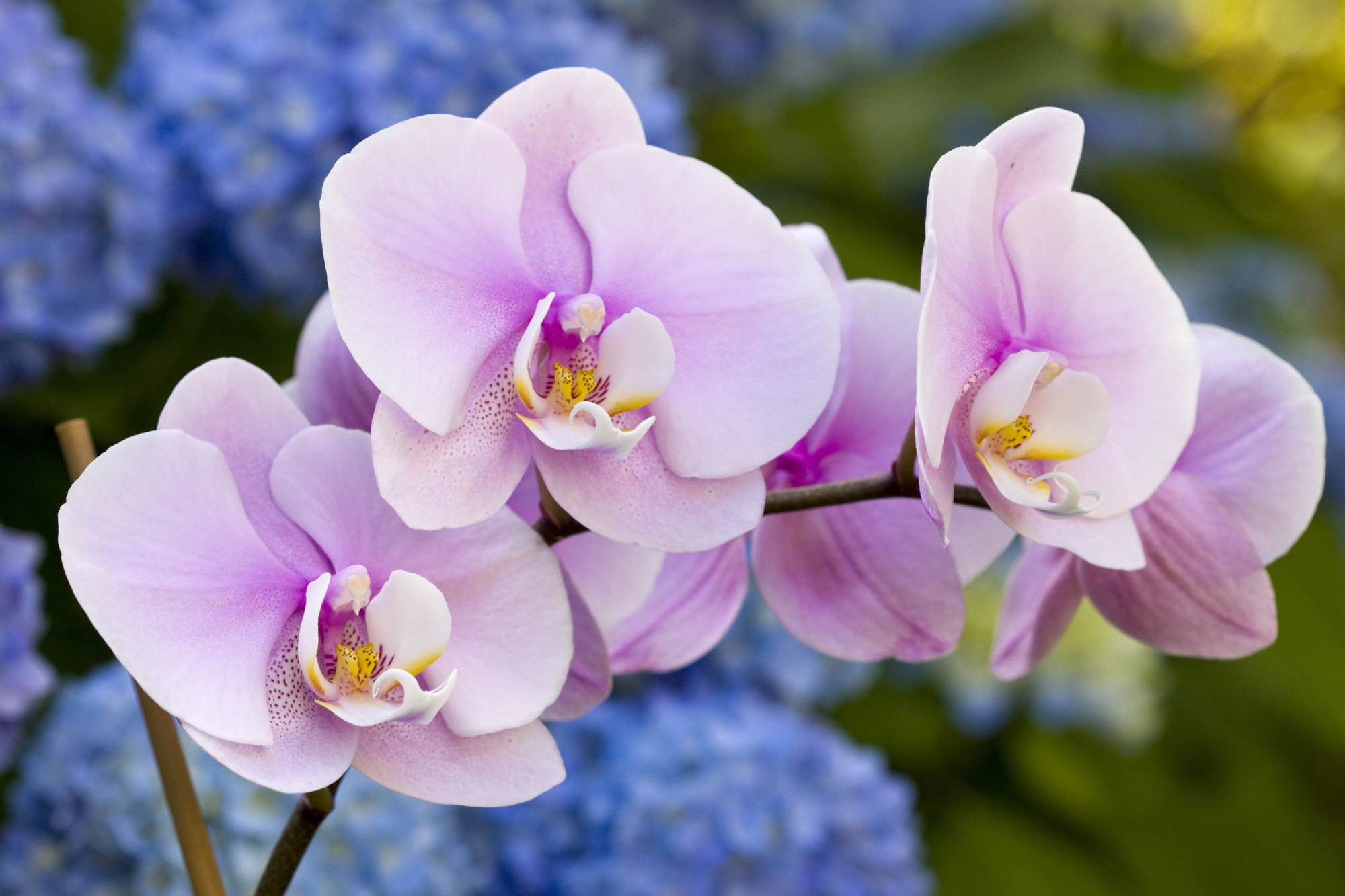 orchid care beginners guide